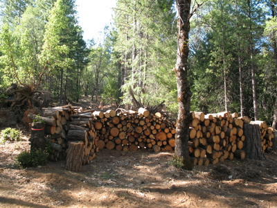 The softwood pile